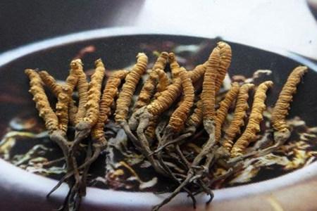 冬虫夏草有什么功效,女性要什么吃才对身体有作用