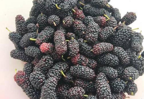 血糖高吃什么水果最好 糖尿病患者吃水果有什么讲究?