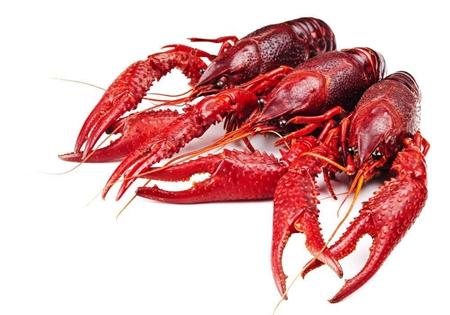 吃货们,这个夏天小龙虾来拯救你!