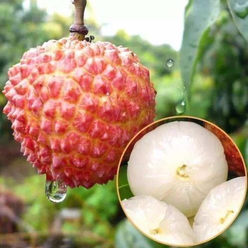 又到了吃荔枝的季节了,但是吃荔枝注意以下几点