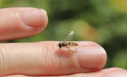 男子被蜜蜂蛰了不以为意,谁知结局竟然这样惨烈