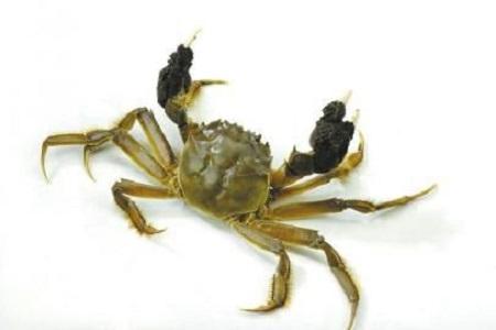 秋天吃螃蟹,这些禁忌要了解