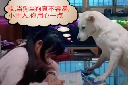 狗狗监督孩子写作业,网友:一片狗心在玉壶