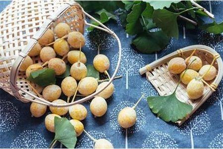 银杏果的功效与作用,三种食用方法让女生养出年轻感