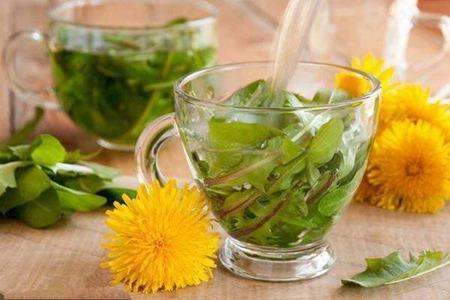 天天喝蒲公英茶的功效和作用,女性乳腺增生喝它效果明显