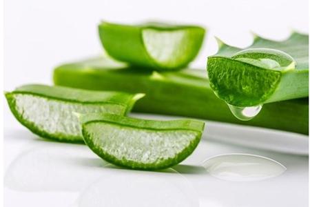 芦荟对皮肤的四大功效与作用,芦荟水女性用出年轻肌肤