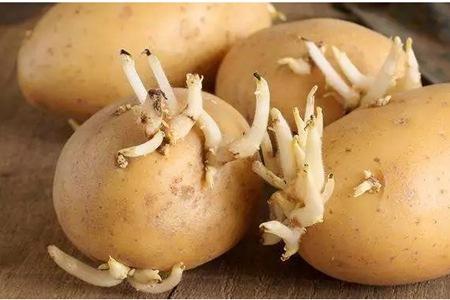 這種土豆發芽絕對不能吃,食用發芽土豆教你三招解毒方法