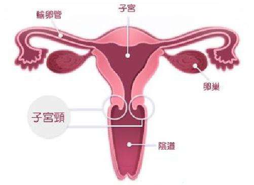 还怕宫颈癌?宫颈癌疫苗出来了!马速来看!