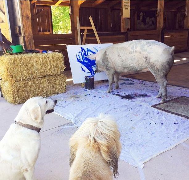 """猪界""""毕加索""""已卖18.5万元油画 网友称:活的不如猪"""