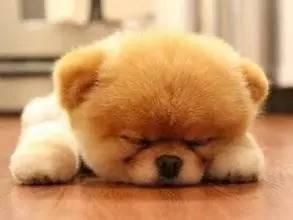 午睡是美容补充睡眠的好方法,那么怎么样的午睡才是对的呢?