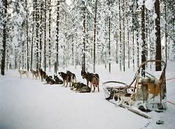 北极寻找圣诞老人蜜月旅游游记(芬兰旅游攻略)