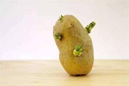土豆发芽了还能吃吗?长了一点点小芽可以抠掉再吃吗?