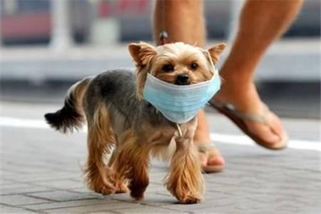 美国累计病例破百死亡人数更新,香港宠物狗首例感染新冠肺炎