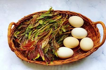 香椿炒鸡蛋的六个禁忌,香椿好吃错误做法也伤身