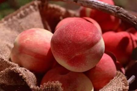 桃子的六个功效与作用,这三类禁忌人群不能吃桃子