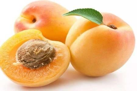 杏子的功效和作用是什么,吃杏子润肺止咳要适量
