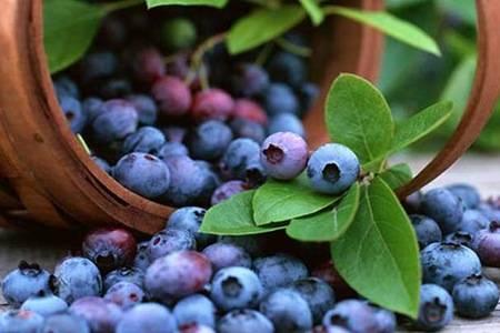 蓝莓的功效与作用  蓝莓的健康吃法了解一下