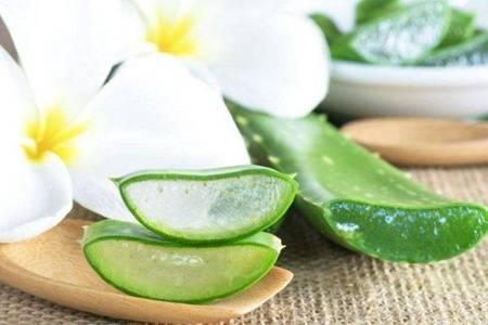 芦荟面膜可以天天敷吗  芦荟的功效与作用是什么