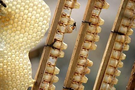 蜂王浆的功效与作用  蜂王浆有什么营养价值可以涂在脸上吗