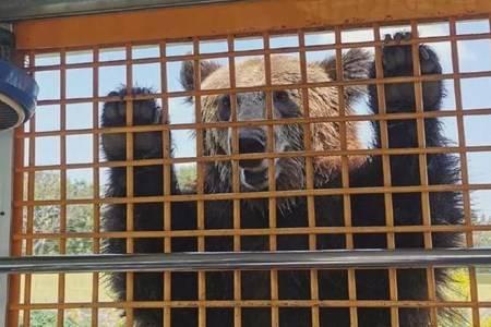 上海动物园熊群将人活活咬死怎么回事  谁该负责是动物本性难改吗