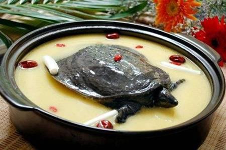 甲鱼汤的做法 甲鱼汤的功效和作用