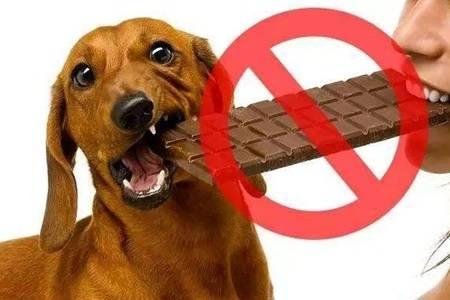 狗狗为什么不能吃巧克力  为什么巧克力会对狗狗有害