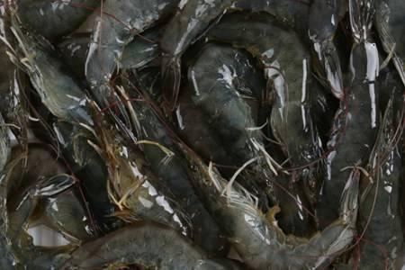 海虾与淡水虾有什么区别  海南野生白刺虾干晒温肾固精
