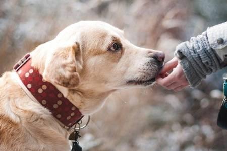 小区全面禁养宠物合理吗  小区养宠物会带来什么问题