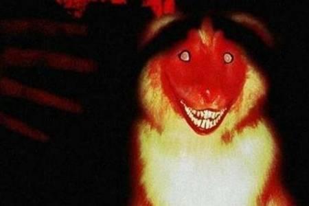 微笑狗事件为什么恐怖是真的吗 微笑狗事件究竟死了多少人