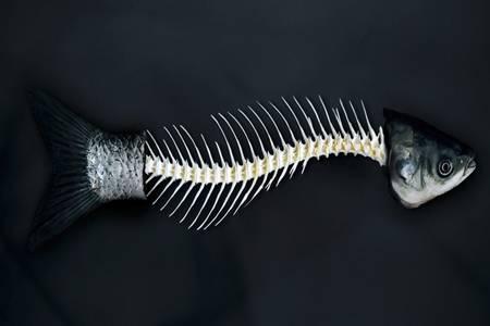 鱼刺卡喉咙怎么办?鱼刺卡喉咙自救有妙招