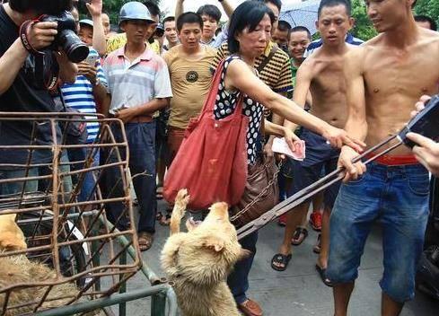 四川小伙自费800万救流浪狗 拒绝一切捐助图什么?