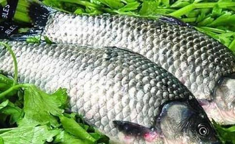 鲫鱼汤的做法和步骤 如何熬鱼汤会变乳白色?