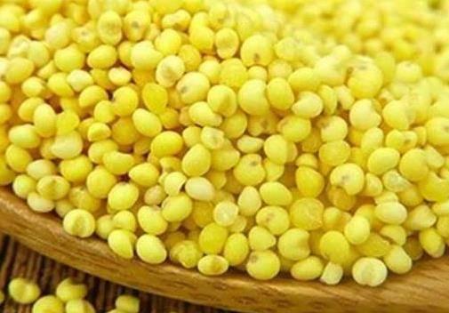 黄米的功效与作用有哪些 最简单黄米凉糕做法