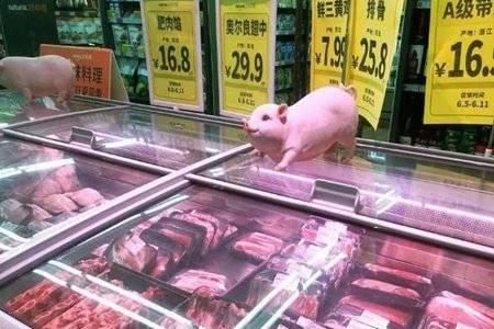 猪肉价跌破每斤15元 网友:还能养猪赚钱吗?