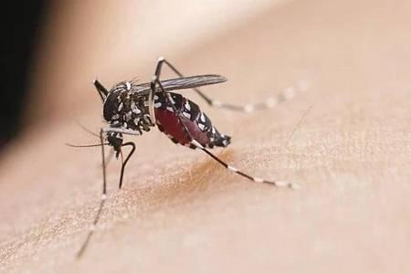 什么样的人最容易招蚊子 为何蚊子总咬着你不放